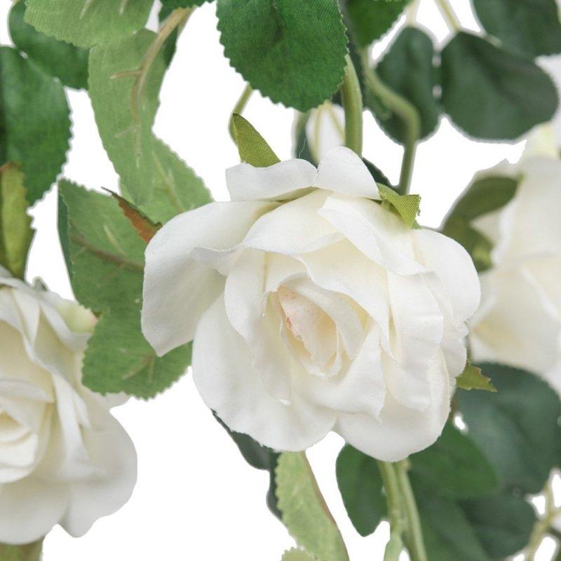 Bluszcz Kwitnący Różyczki Białe