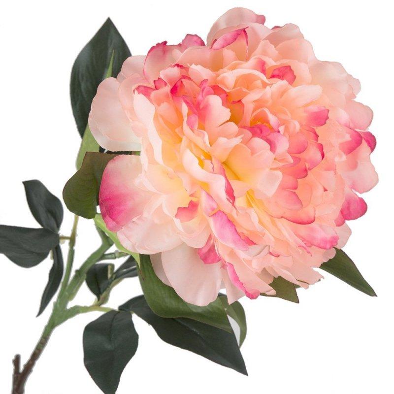 Peonia Gałązka Brzoskwinia/Róż