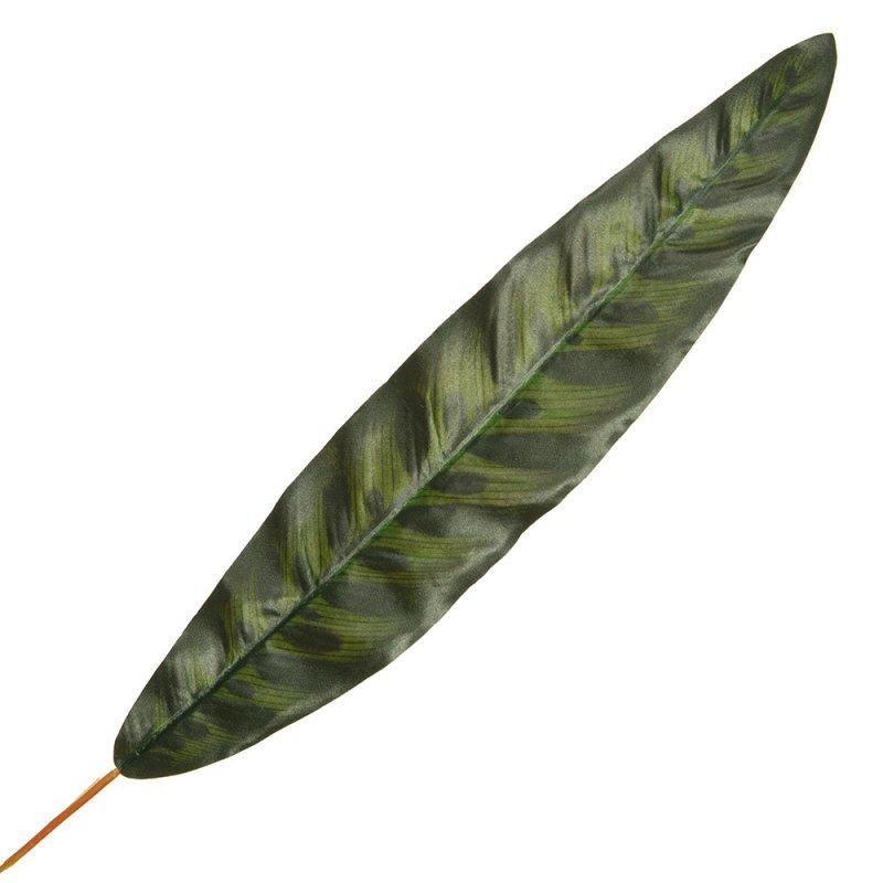 Liść Kalatei Ciemna Zieleń 50cm
