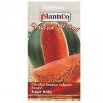 ARBUZ Sugar Baby nasiona 2g Plantico