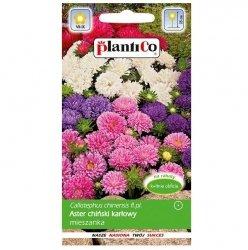 ASTER karłowy peoniowy MIX nasiona kwiatów 1g