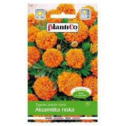 AKSAMITKA niska POMARAŃCZOWA nasiona kwiatów 1g