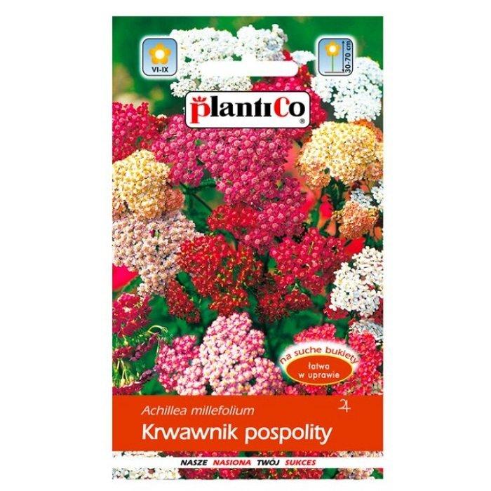 Krwawnik pospolity nasiona Plantico