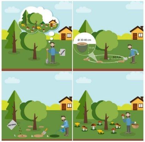 Grzybnie w ogrodzie - instrukcja