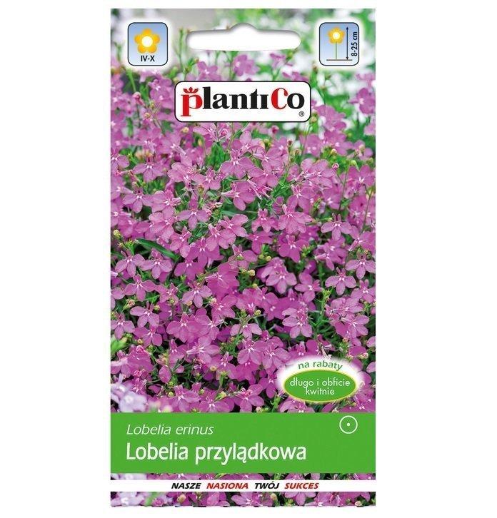 Lobelia przylądkowa różowa nasiona Plantico