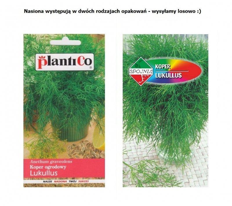 Koper ogrodowy wczesny LUKULLUS nasiona 5g