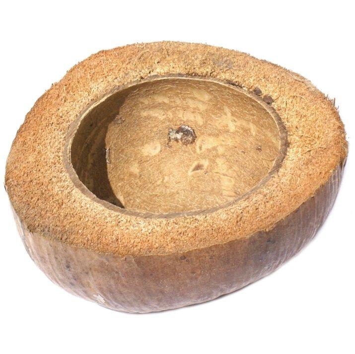 Doniczka z łupiny kokosa