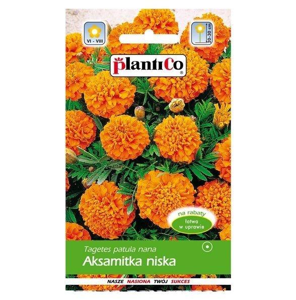 Aksamitka pomarańczowa nasiona