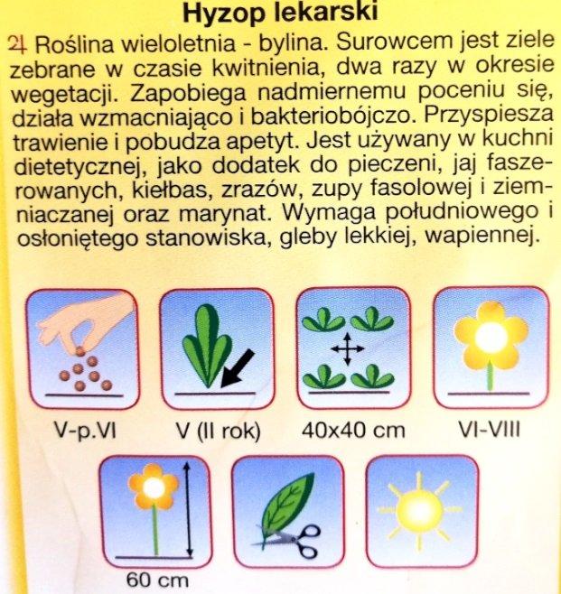 Hyzop lekarski nasiona Plantico