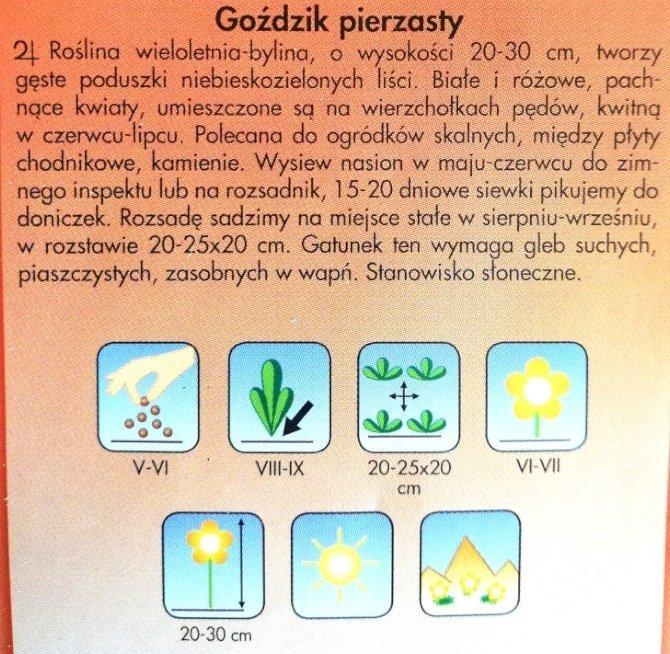 Goździk pierzasty nasiona Plantico