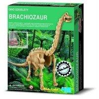 Wykopaliska Brachiozaur - dino szkielet