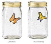 Motyl w słoiku - Monarcha