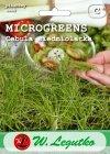 Microgreens cebula
