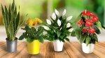 Jak dbać i uprawiać rośliny ozdobne w domu ?