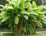 Rośliny egzotyczne do domu i ogrodu - poznaj najczęściej popełniane błędy w uprawie.