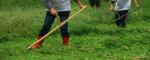Jak i kiedy kosić kwietną łąkę?