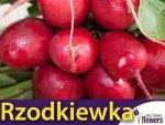 Rzodkiewka Cherry Belle (Raphanus sativus) Opakowanie XXL 500g