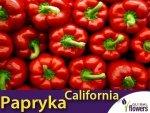 Papryka Czerwona Słodka California Wonder (Capsicum annuum) 0,5g