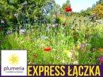 Kwietna łąka EXPRESS ŁĄCZKA unikalna mieszanka szybko kwitnących roślin nasiona 100g