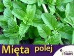 Mieta polej (Mentha pulegium) 0,1g