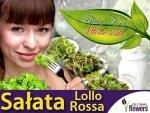Baby Leaf  (Lactuca sativa) Sałata liściowa Lollo Rossa 1,5g