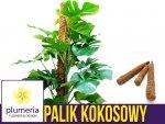 Palik kokosowy tyczka - podpora do roślin 60 cm x 25 mm - 1 szt.