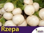 Rzepa jadalna Snowball (Brassica rapa var. rapa) 5 g