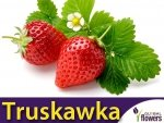 Truskawka Tresca Silnie owocująca (Fragaria x ananassa) 0,05g