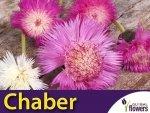 Chaber cesarski, mieszanka (Centaurea imperalis) 1g