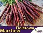 Fioletowa Marchew Deep Purple F1 Średnio Późna (Daucus carota) 0,5g