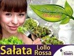 Sałata liściowa Lollo Rossa, czerwona (Lactuca sativa) 1g nasiona
