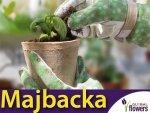 Rękawice Ogrodnicze - Majbacka - Komfortowe i eleganckie