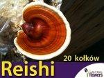 Reishi grzybnia na kołkach 20szt kołków - stosowany w medycynie naturalnej