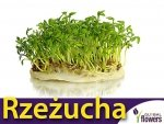Rzeżucha ogrodowa (Lepidium sativum) XL 10 g