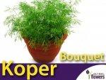 Koper ogrodowy Bouquet  (Anethum graveolens) 5g