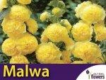 Malwa, Prawoślaz Żołta (Alcea rosea fl.pl.) 0,5 Nasiona
