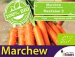 BIO Marchew jadalna Nantaise 2 5g