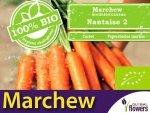 BIO Marchew jadalna Nantaise 2 5g