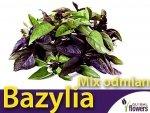 Bazylia mieszanka odmian (Ocimum basilicum) 0,50 g