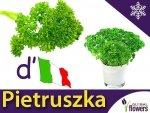 Pietruszka naciowa Gigante d' Italia (Petroselinum crispum) XXL 500g