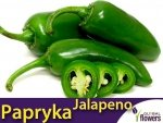 Papryka Ostra Jalapeno Tam Zielona (Capsicum annuum)