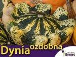 Dynia ozdobna, Korona cierniowa (Cucurbita pepo) 1g  nasiona
