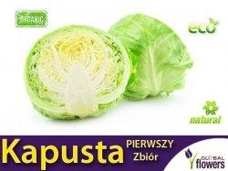 Kapusta Pierwszy Zbiór - Brassica oleracea (Convar.Capitatan var. Alba) 2g