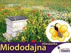 Mieszanka bylinowa roślin miododajnych na TERENY PODMOKŁE nasiona XXL 100g