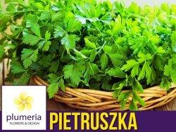 Pietruszka naciowa (Petroselinum crispum) Sadzonka C1,5