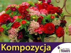 Kompozycja Czerwonych Roślin Jednorocznych 1 g nasiona