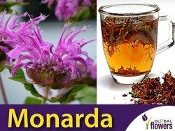 Pysznogłówka Cytrynowa (Monarda citriodora)