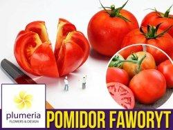 Pomidor FAWORYT Wielkie Owoce (Lycopersicon Esculentum) nasiona 0,75g