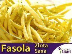 Fasola szparagowa ZŁOTA SAXA karłowa żółtostrąkowa (Phaseolus vulgaris) nasiona 50g