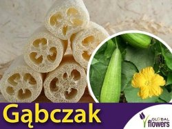 Gąbczak walcowaty (Luffa cylindrica) 1g nasiona LUX